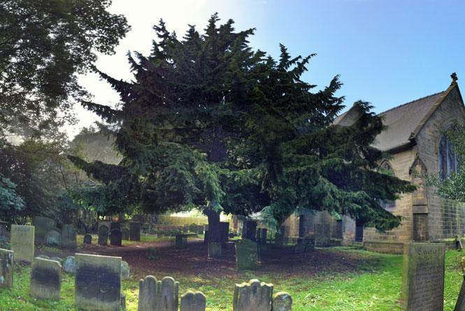 Yew-Tree.jpg